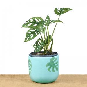 philodendron-monkey-mask